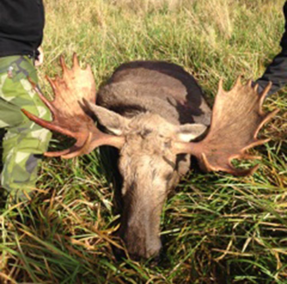En fin 20-taggare fälldes andra älgjaktdagen på Valsinge i Björsäter. Ett resultat av sparande av mindre tjurar.