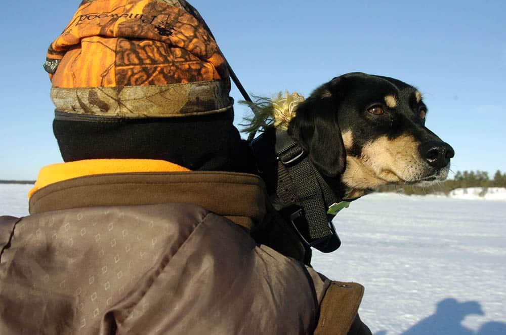 Blir man friskare av att ha hund? Foto: Jan Henricson