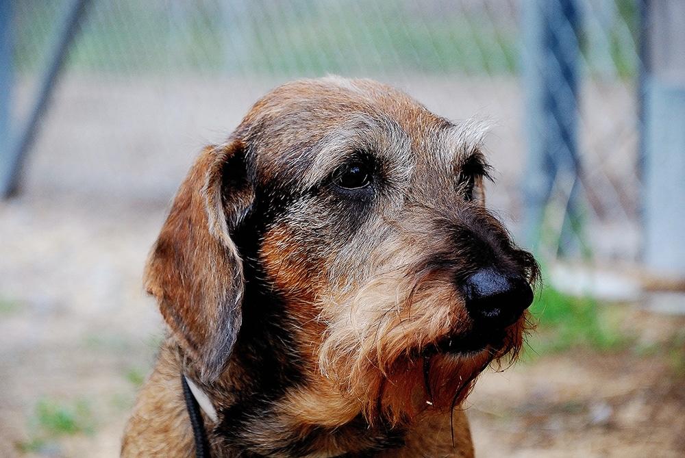 En älskad hund finns inte längre, men minnet av jaktkamraten är fyllt av glädje. Foto: Privat