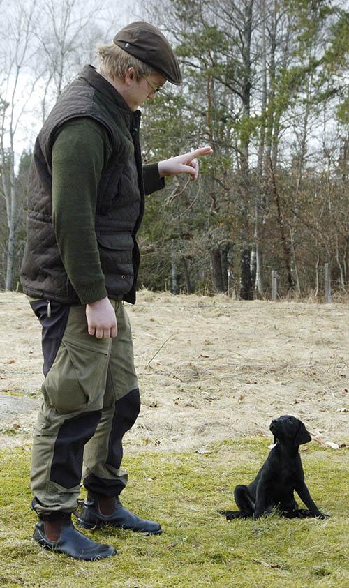 Den första valpträningen kommer att bli uppfödarens ansvar, vid import av hundvalp. Foto: Jan Henricson