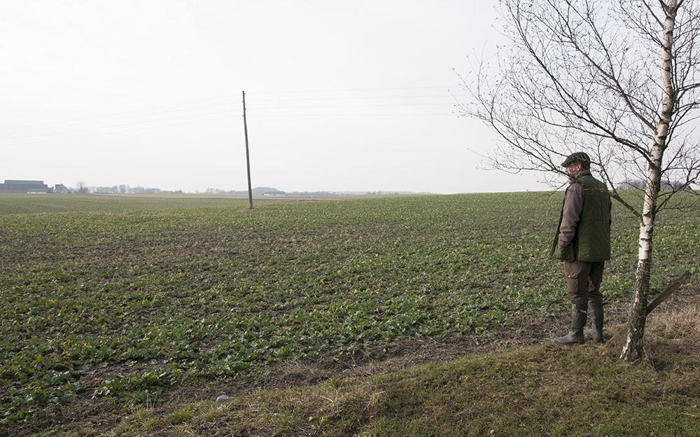 Markägare och odlare kan göra mycket för viltet och därigenom motverka effekterna av ett storskaligt brukande. Till fördel också för produktionen eftersom nyttodjur för jordbruket, som exempelvis pollinatörer, gynnas av viltvårdande åtgärder. Foto: Jan Henricson