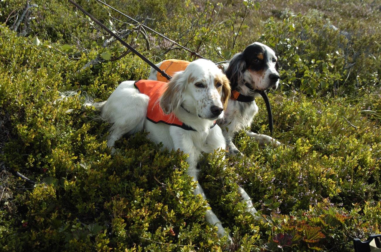 Härnäst ska avtalsförslaget behandlas av Fuglehundstingen i Norge. Foto: Jan Henricson