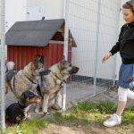 Hundar behöver lära sig att vistas i rastgård och vara lugna och tysta när de är där. Foto: Sten Christoffersson