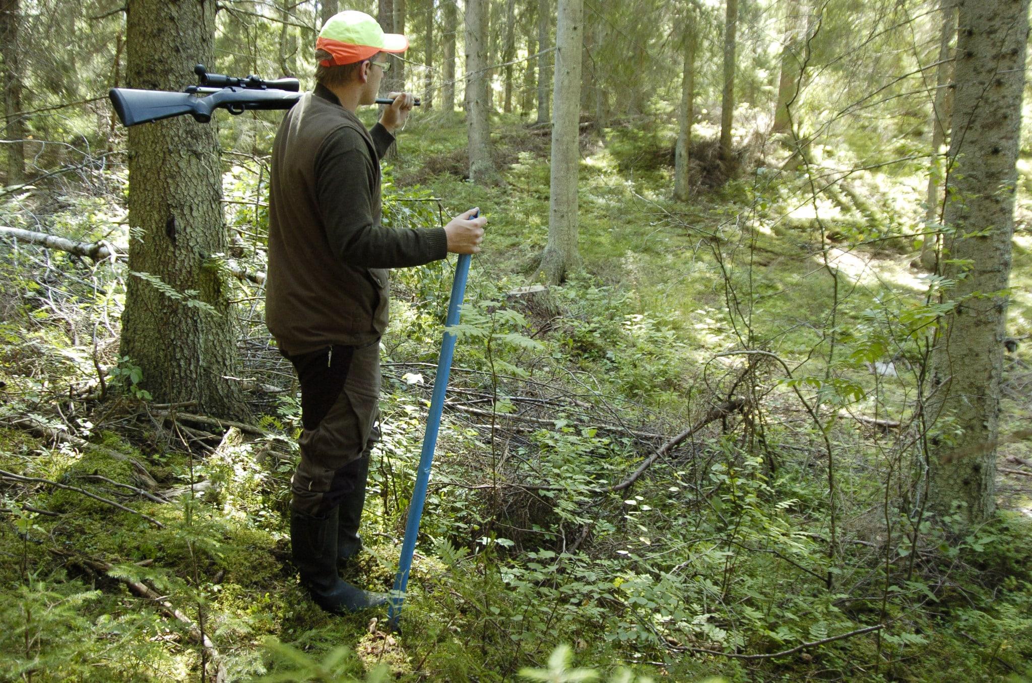 Två tredjedelar av markägarna, 230.000 stycken, jagar inte. Deras intresse av att hyra ut sin jaktmark är helt avgörande för svensk viltförvaltning, skriver debattören. Foto: Jan Henricson