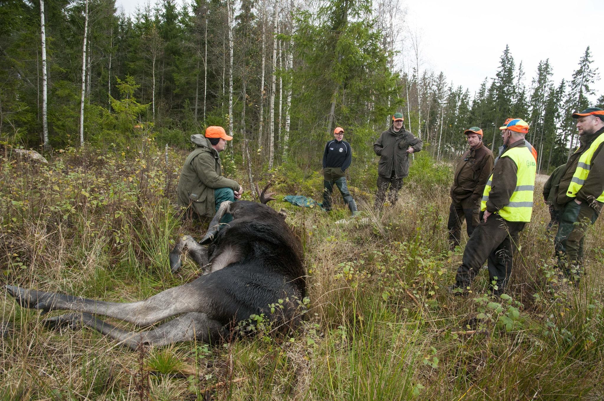 Jägarna är en förutsättning för att Naturvårdsverkets viltstrategi ska kunna nå framgång, skriver debattören. Foto: Jan Henricson