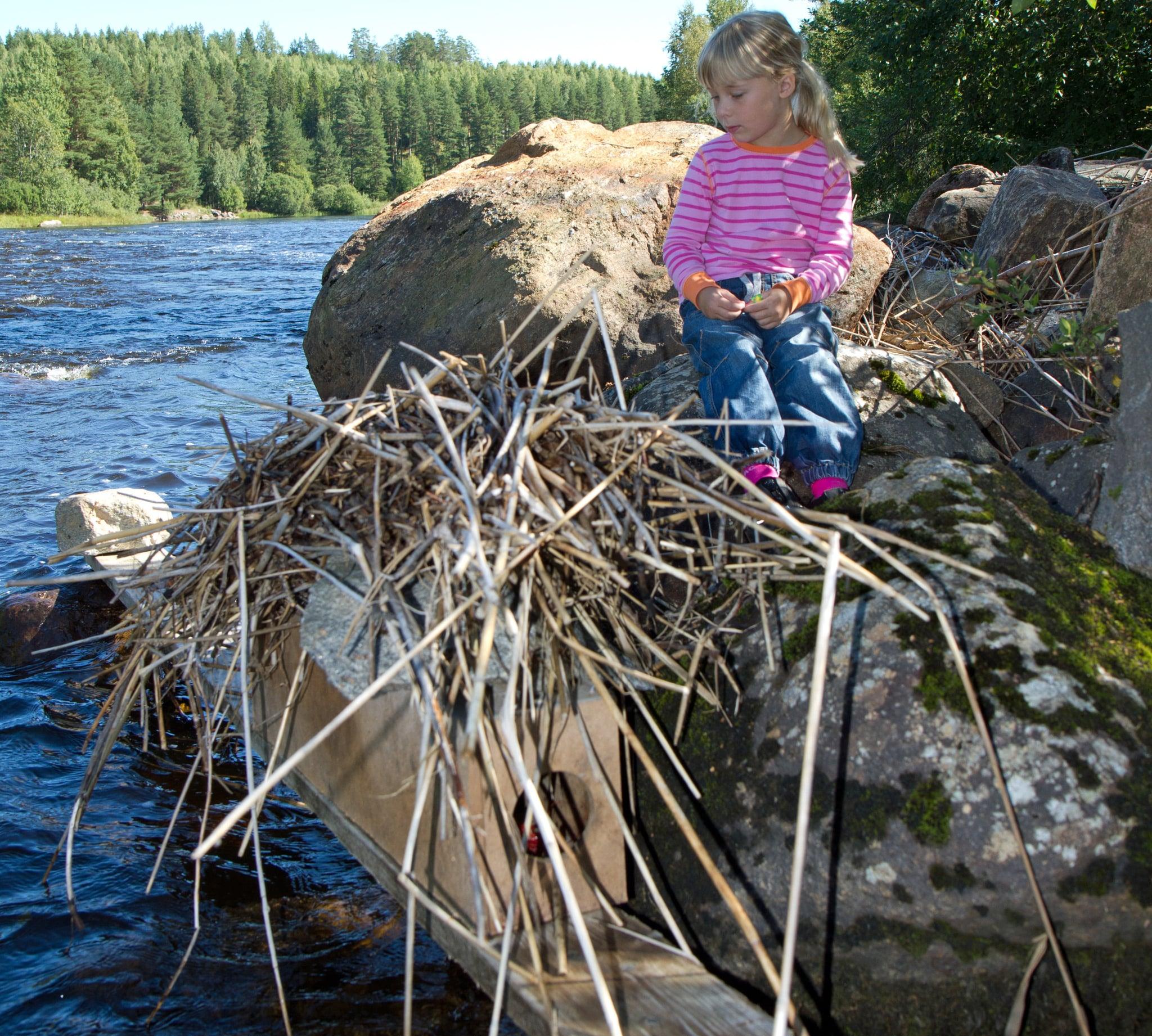 Förutom att minkfångst är viktigt för viltvården kan det vara en bra inkörsport till jakten för barn och ungdomar. Foto: Olle Olsson