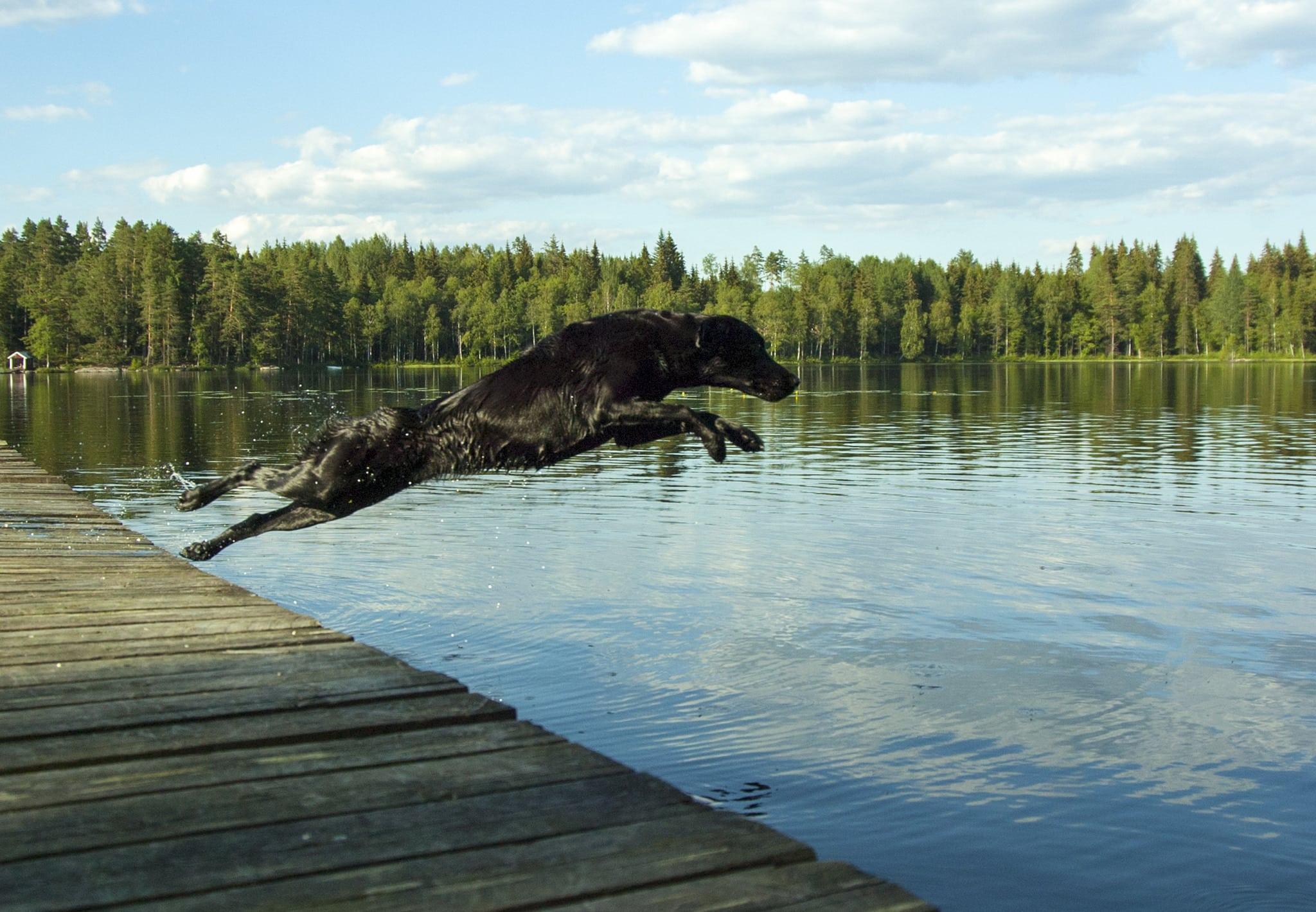 Svenska Kennelklubben satsar på webb-TV. Foto: Jan Henricson