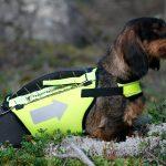 Länsstyrelsen i Dalarna följer nu efter och ger bidrag till skyddsvästar för bland annat jakthundar. Foto: Olle Olsson