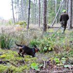 Idaholms Ludde på väg att söka kontakt med sin förare Mikael Fors på NM 2013. Foto: Barbro Zetterberg