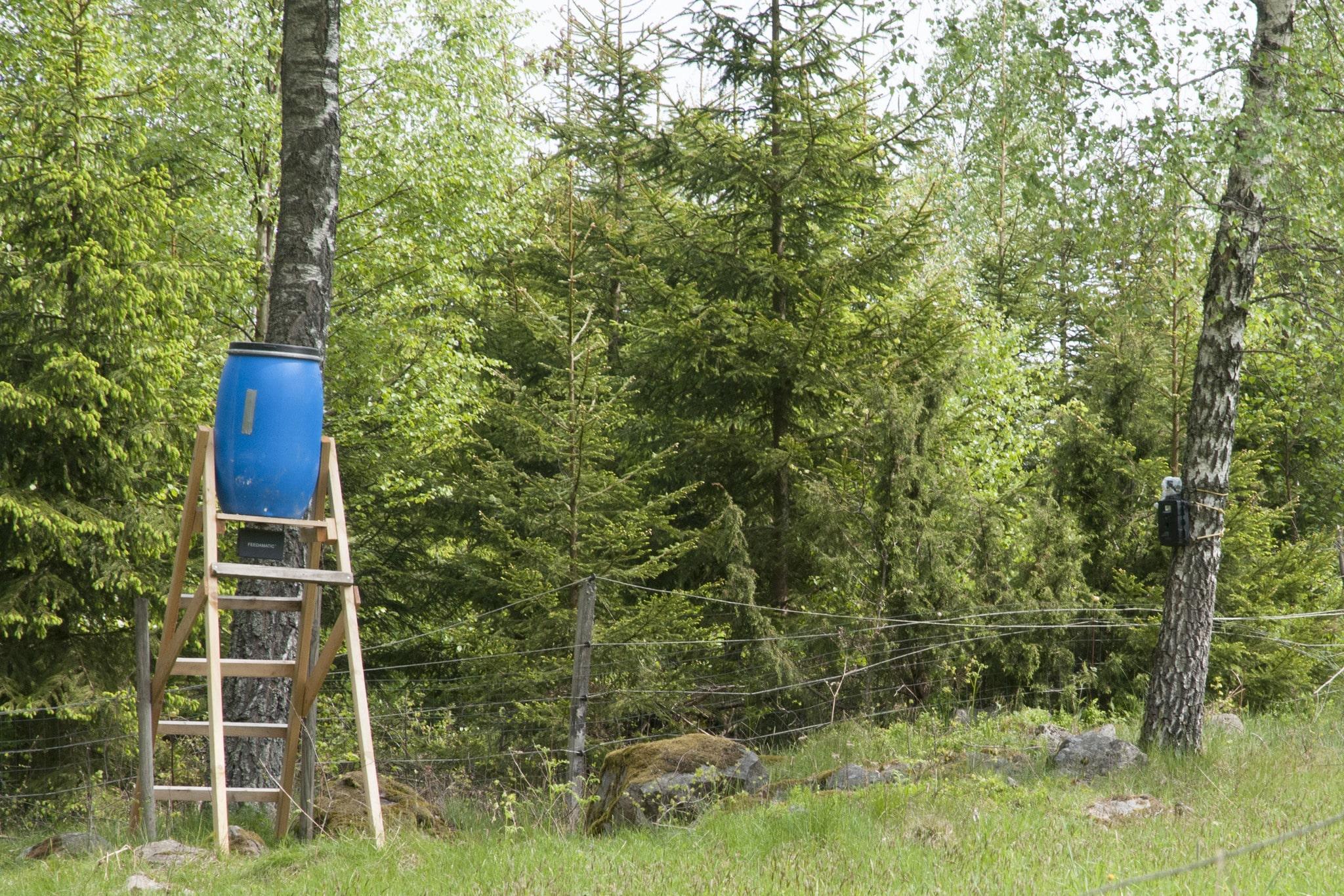 En viltövervakningskamera som här vid en åtel för vildsvin skadar ingen. Bejaka den nya tekniken istället för att motverka den, uppmanar debattören lagstiftarna. Foto: Jan Henricson