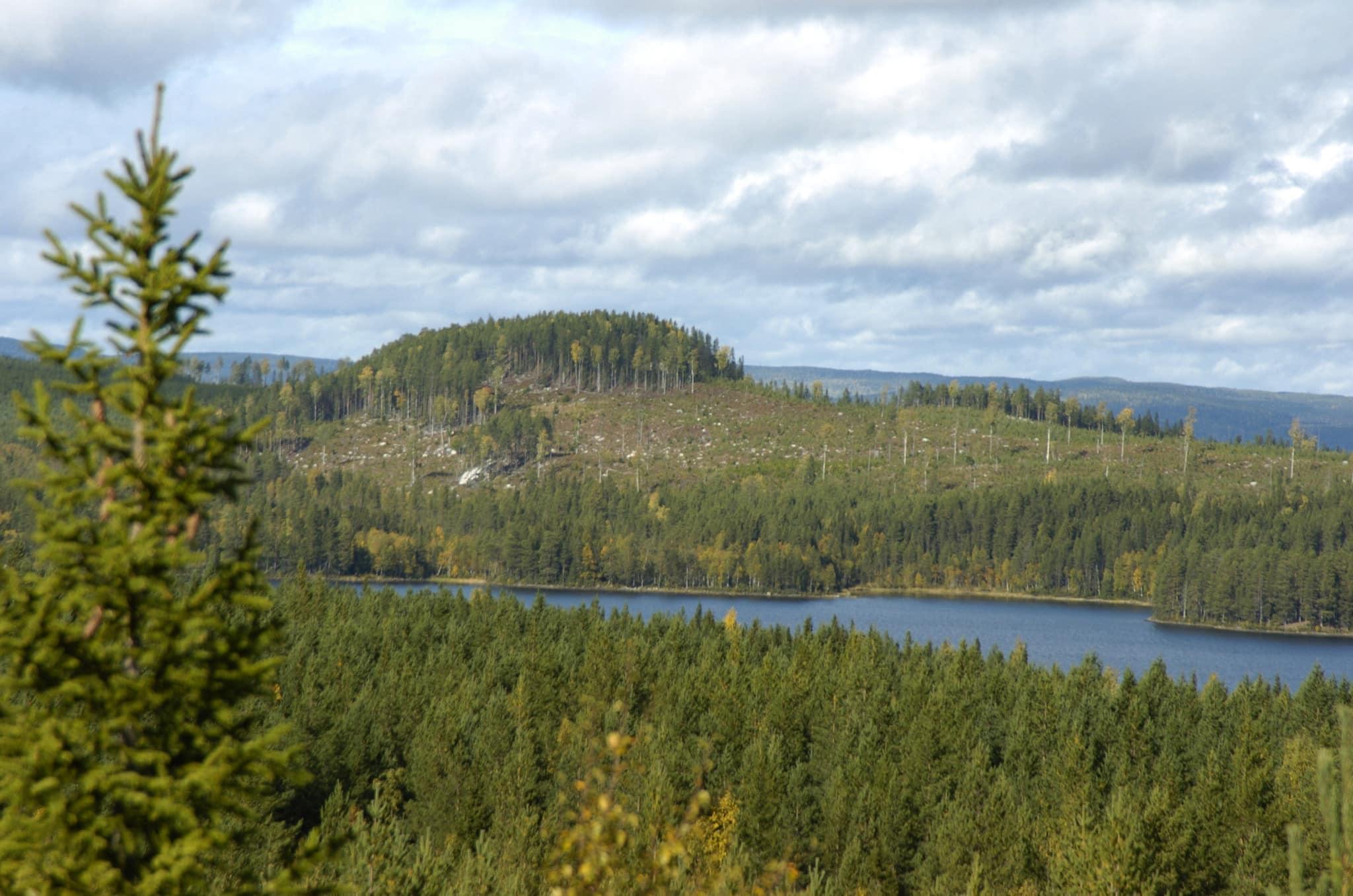 Grupper av träd som lämnas vid slutavverkningarna har stor betydelse för många arter. Och ju större hänsynsyta som lämnas, desto bättre. Foto: Jan Henricson