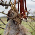 När man transporterar fåglar i snaror är det viktigt att alla fåglarna har både huvudet och ena benet i snaran, för annars finns risken att man tappar fåglarna. Foto: Torsten Mörner