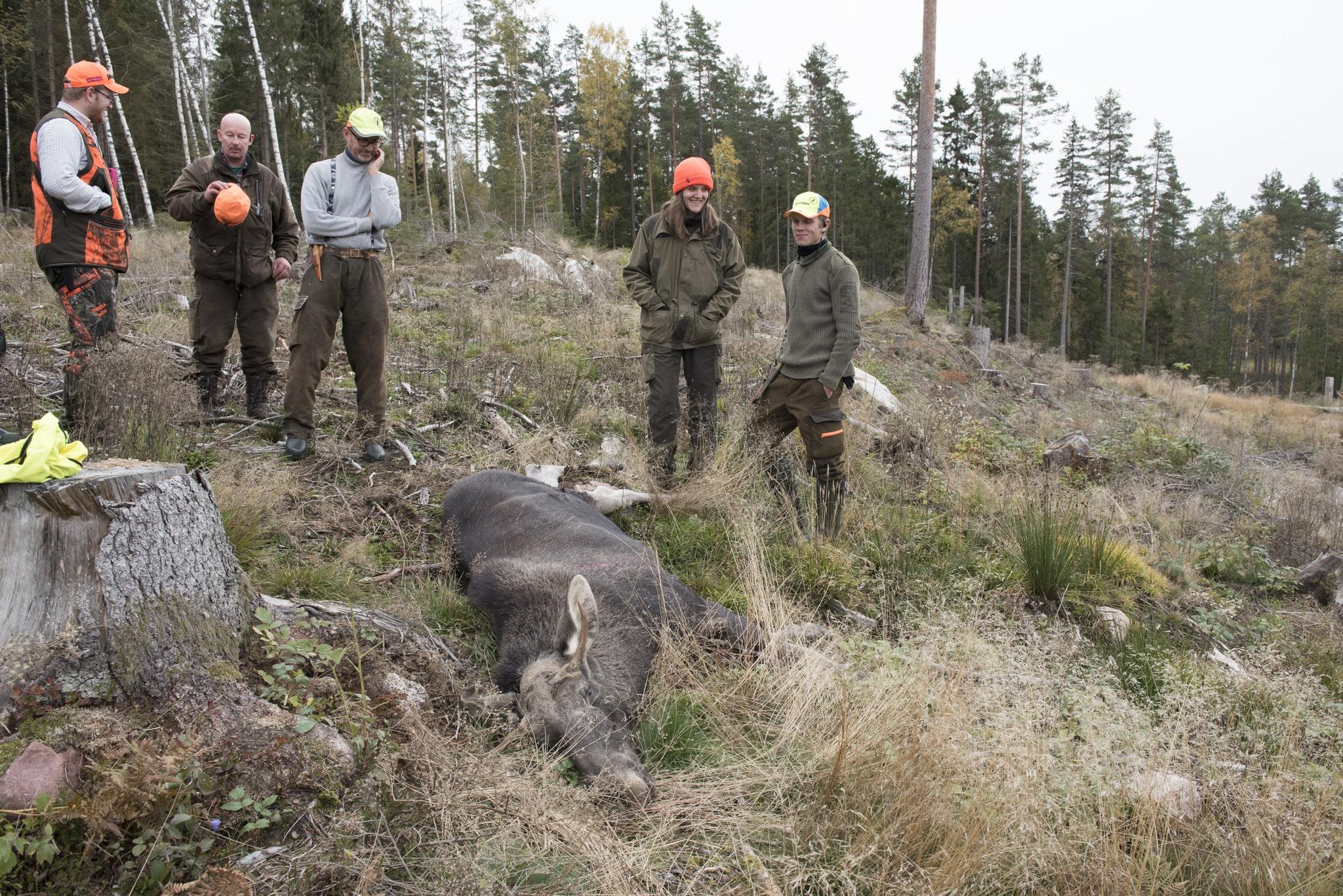 Insändarskribenten menar att det finns ett bra om än inte billigt sätt att få tag på viltkött. Att börja jaga. Foto: Jan Henricson