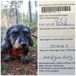 Id-märkning av hundar kan bli obligatorisk i hela EU. Foto: Olle Olsson & Marie Gadolin