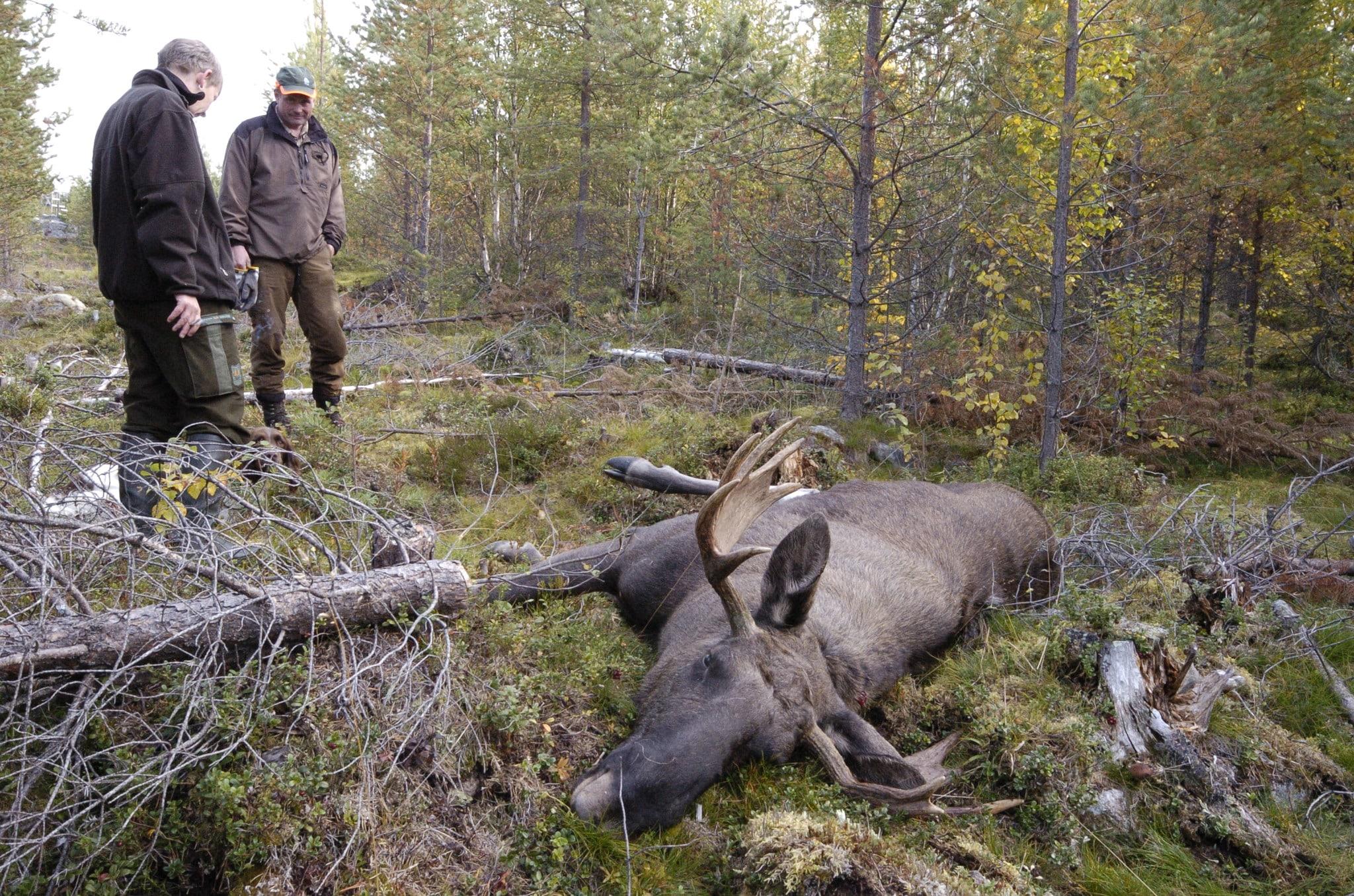 jakt och jägare