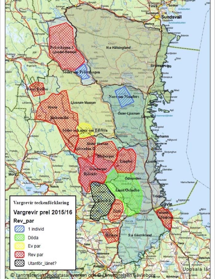 gävleborg karta Explosionsartad ökning av lodjur och varg i Gävleborgs län  gävleborg karta