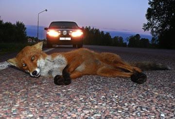Antalet vilda djur har halverats pa 40 ar