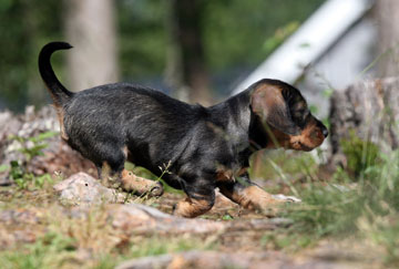 Hundägare kan numera registrera sin hund via Jordbruksverkets webbplats. Foto: Olle Olsson