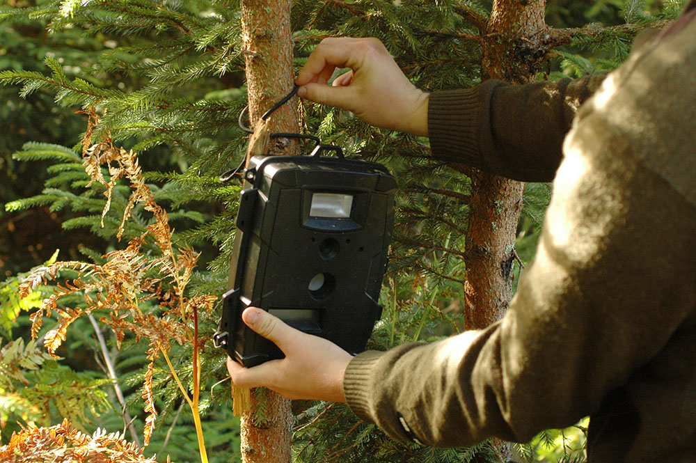 Åtelkamerorna ska utredas vidare – av jaktlagsutredaren. Foto: Jan Henricson