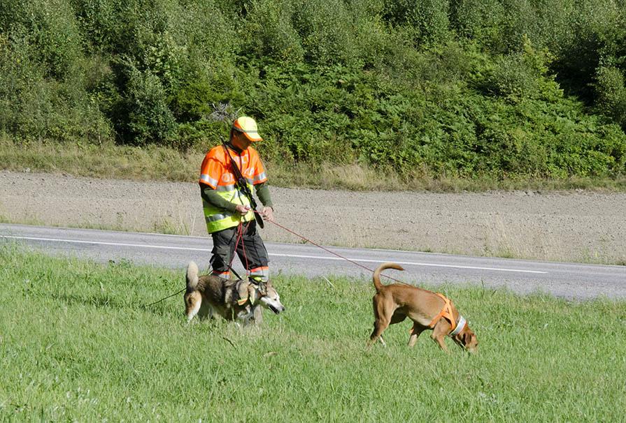 Den nya eftersöksutbildningen ligger i linje med den utredning av hundverksamheten som gjordes under fjolåret. Foto: Martin Källberg